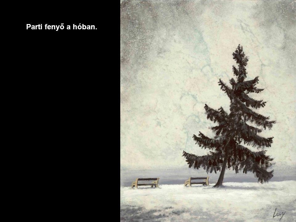 Téli élmények.