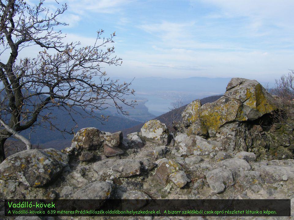 Vadálló-kövek A Vadálló-kövek a 639 méteres Prédikálószék oldalában helyezkednek el. A bizarr sziklákból csak apró részletet látunk a képen.