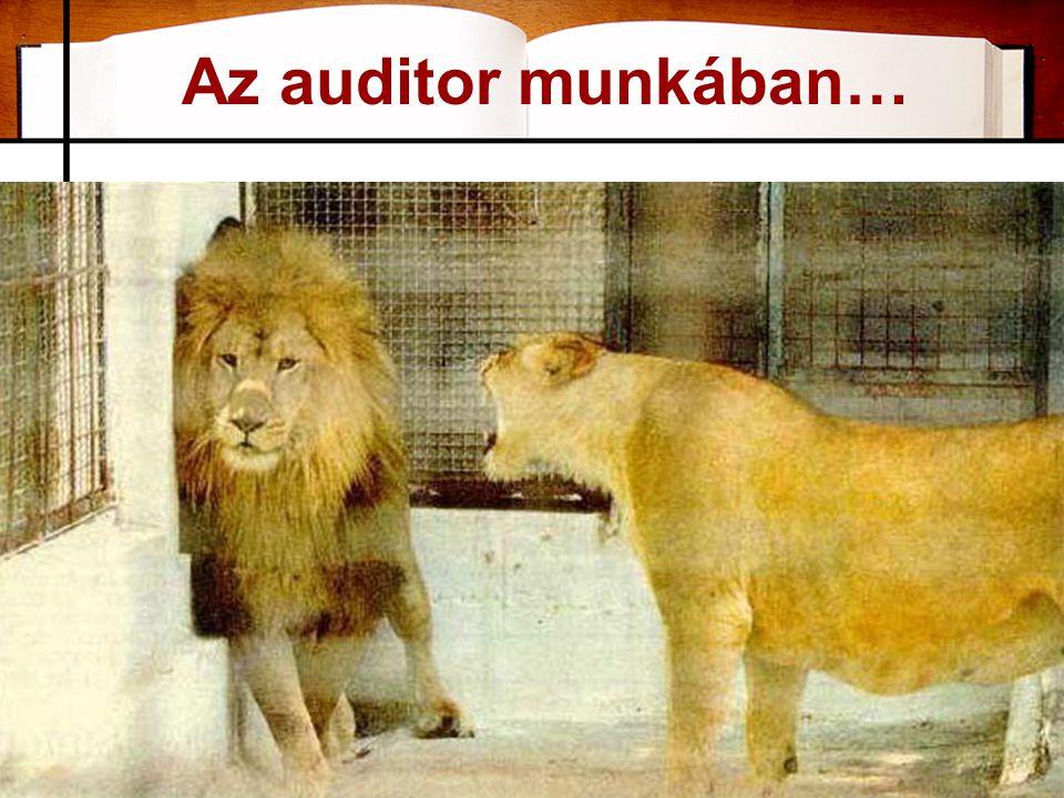 Az auditor munkában… 24