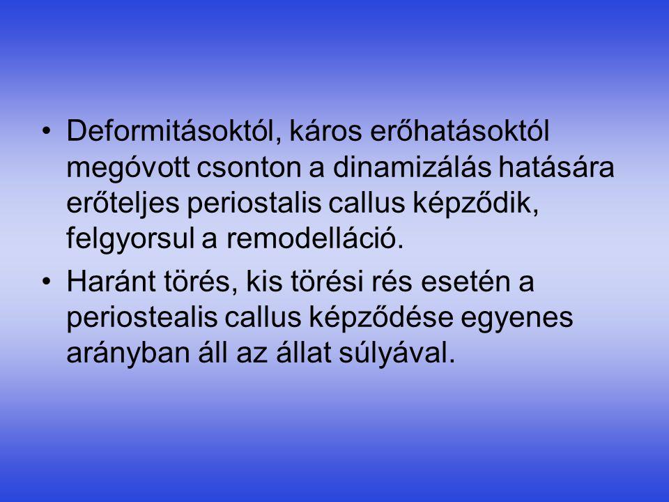 •Deformitásoktól, káros erőhatásoktól megóvott csonton a dinamizálás hatására erőteljes periostalis callus képződik, felgyorsul a remodelláció. •Harán