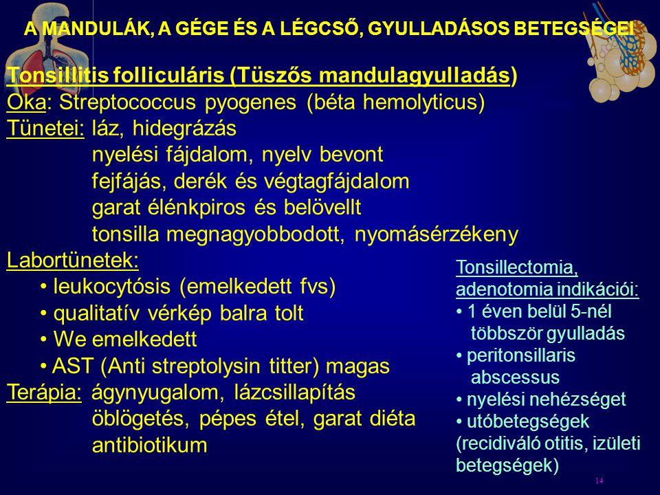 14 A MANDULÁK, A GÉGE ÉS A LÉGCSŐ, GYULLADÁSOS BETEGSÉGEI Tonsillitis folliculáris (Tüszős mandulagyulladás) Oka: Streptococcus pyogenes (béta hemolyt