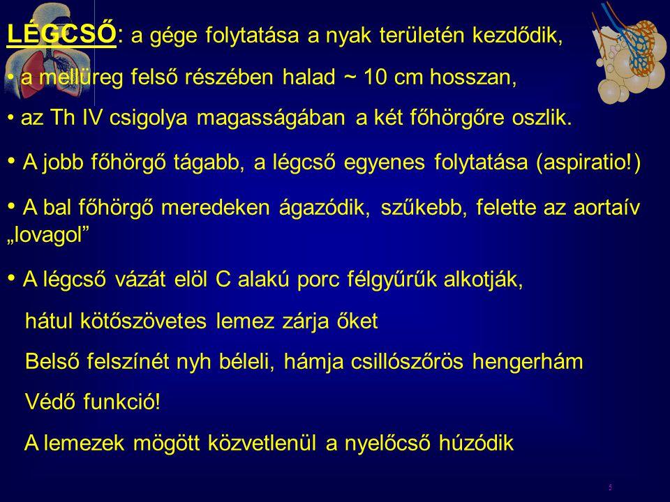 16 Epyglottitis: Haemophylus infl.