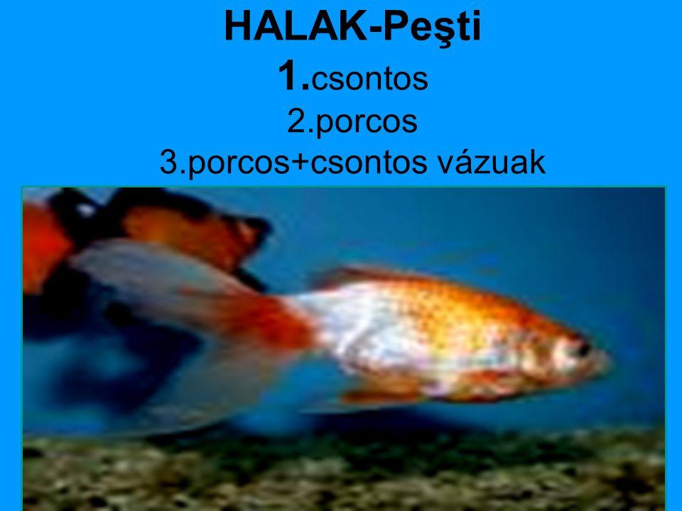 HALAK-Peşti 1. csontos 2.porcos 3.porcos+csontos vázuak