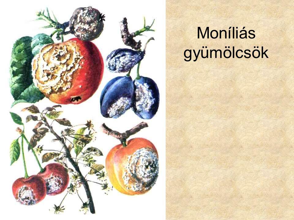 Moníliás gyümölcsök