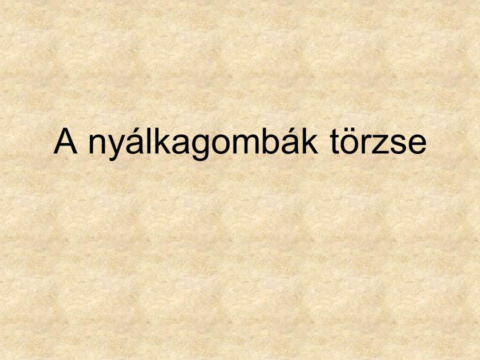 Források: •Magyarország gombái CD, Kossuth Kiadó és ComCom Bt.