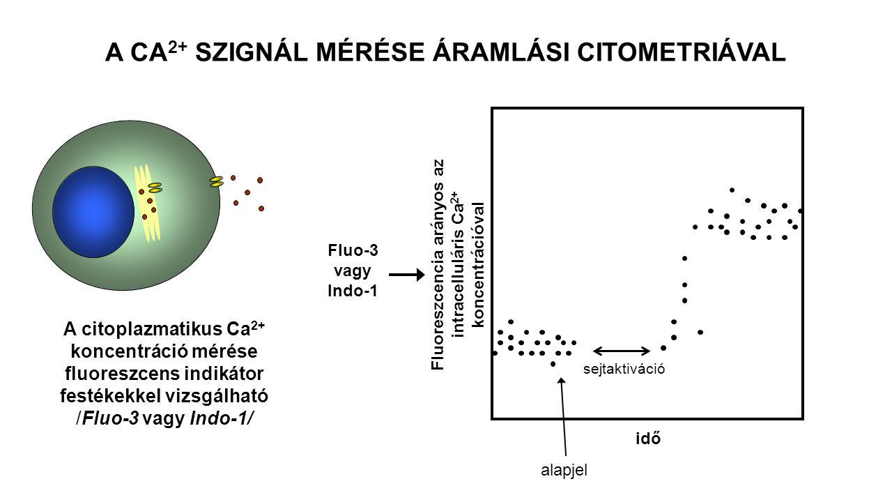 Fluoreszcencia arányos az intracelluláris Ca 2+ koncentrációval idő alapjel sejtaktiváció Fluo-3 vagy Indo-1 A CA 2+ SZIGNÁL MÉRÉSE ÁRAMLÁSI CITOMETRIÁVAL A citoplazmatikus Ca 2+ koncentráció mérése fluoreszcens indikátor festékekkel vizsgálható /Fluo-3 vagy Indo-1/