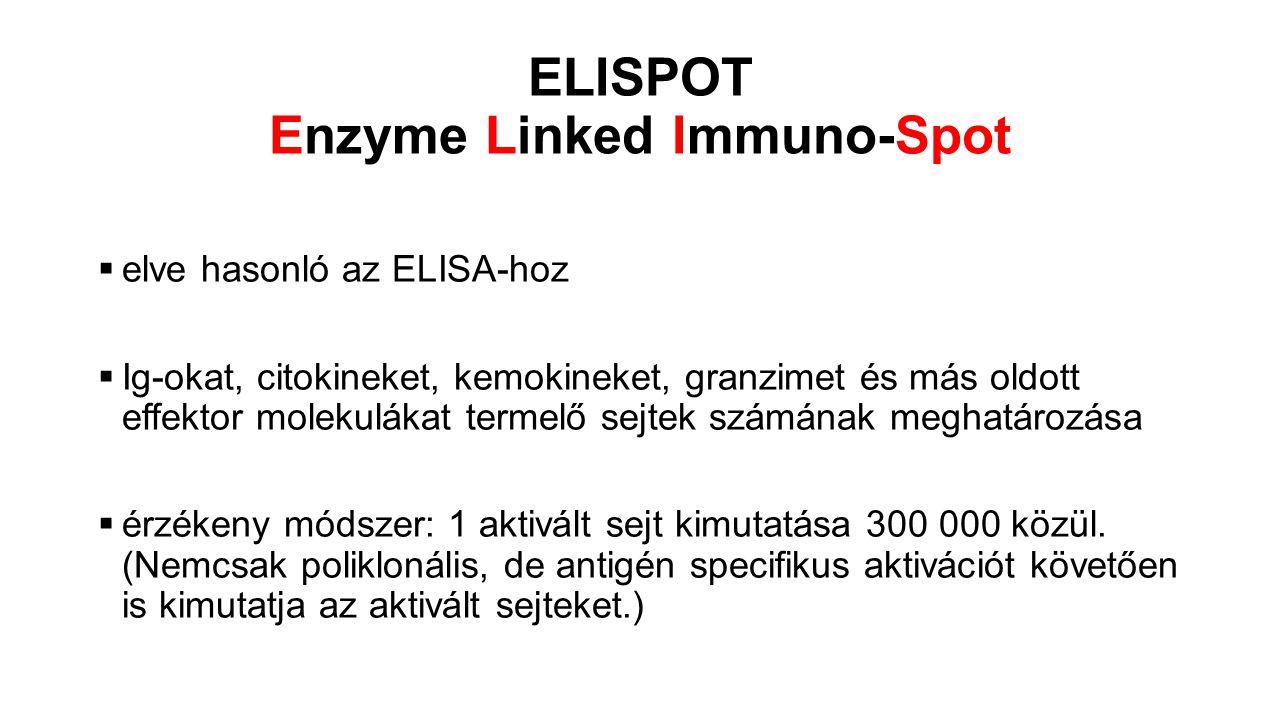ELISPOT Enzyme Linked Immuno-Spot  elve hasonló az ELISA-hoz  Ig-okat, citokineket, kemokineket, granzimet és más oldott effektor molekulákat termel
