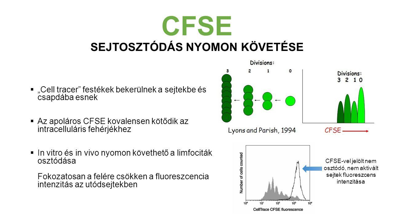 """CFSE SEJTOSZTÓDÁS NYOMON KÖVETÉSE  """"Cell tracer festékek bekerülnek a sejtekbe és csapdába esnek  Az apoláros CFSE kovalensen kötődik az intracelluláris fehérjékhez  In vitro és in vivo nyomon követhető a limfociták osztódása Fokozatosan a felére csökken a fluoreszcencia intenzitás az utódsejtekben CFSE-vel jelölt nem osztódó, nem aktivált sejtek fluoreszcens intenzitása"""