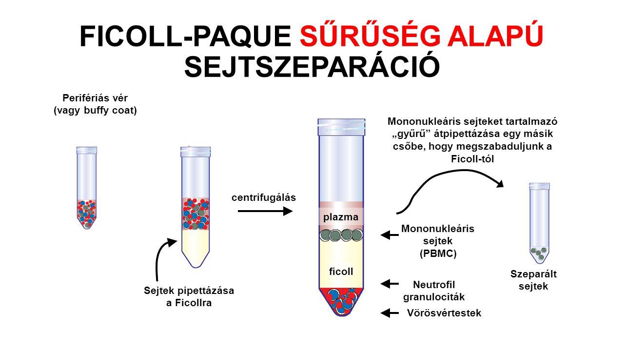 """Perifériás vér (vagy buffy coat) Sejtek pipettázása a Ficollra centrifugálás Szeparált sejtek plazma ficoll Vörösvértestek Mononukleáris sejtek (PBMC) Neutrofil granulociták Mononukleáris sejteket tartalmazó """"gyűrű átpipettázása egy másik csőbe, hogy megszabaduljunk a Ficoll-tól FICOLL-PAQUE SŰRŰSÉG ALAPÚ SEJTSZEPARÁCIÓ"""