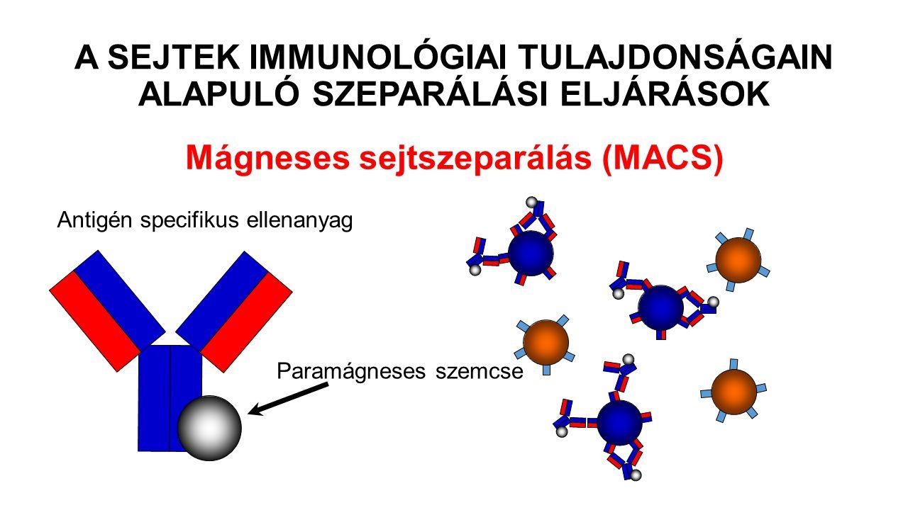 Mágneses sejtszeparálás (MACS) Paramágneses szemcse Antigén specifikus ellenanyag A SEJTEK IMMUNOLÓGIAI TULAJDONSÁGAIN ALAPULÓ SZEPARÁLÁSI ELJÁRÁSOK