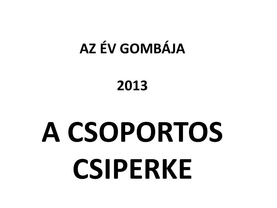 AZ ÉV GOMBÁJA 2013 A CSOPORTOS CSIPERKE
