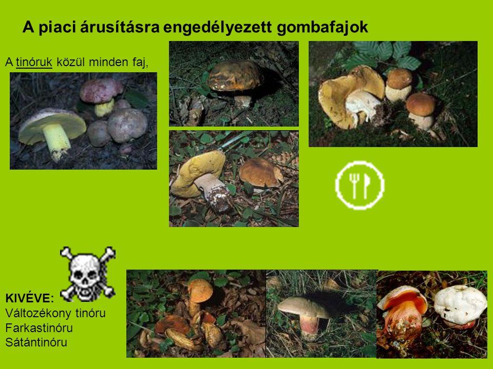 A tinóruk közül minden faj, KIVÉVE: Változékony tinóru Farkastinóru Sátántinóru A piaci árusításra engedélyezett gombafajok