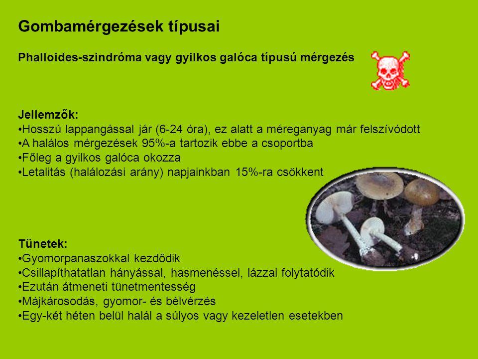 Gombamérgezések típusai Phalloides-szindróma vagy gyilkos galóca típusú mérgezés Jellemzők: •Hosszú lappangással jár (6-24 óra), ez alatt a méreganyag