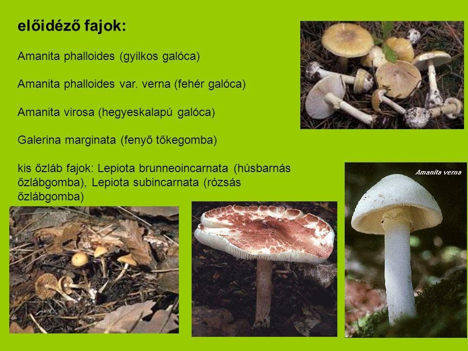előidéző fajok: Amanita phalloides (gyilkos galóca) Amanita phalloides var. verna (fehér galóca) Amanita virosa (hegyeskalapú galóca) Galerina margina