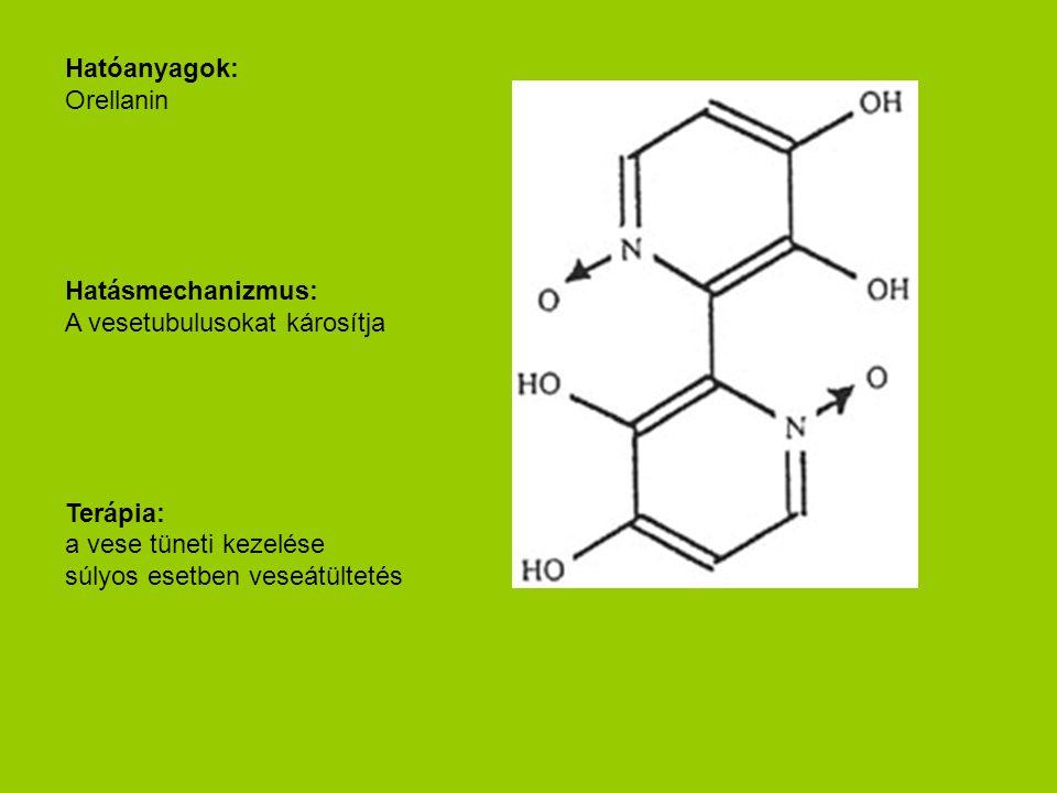 Hatóanyagok: Orellanin Hatásmechanizmus: A vesetubulusokat károsítja Terápia: a vese tüneti kezelése súlyos esetben veseátültetés