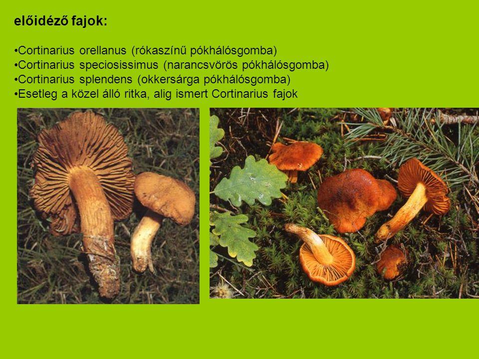 előidéző fajok: •Cortinarius orellanus (rókaszínű pókhálósgomba) •Cortinarius speciosissimus (narancsvörös pókhálósgomba) •Cortinarius splendens (okke