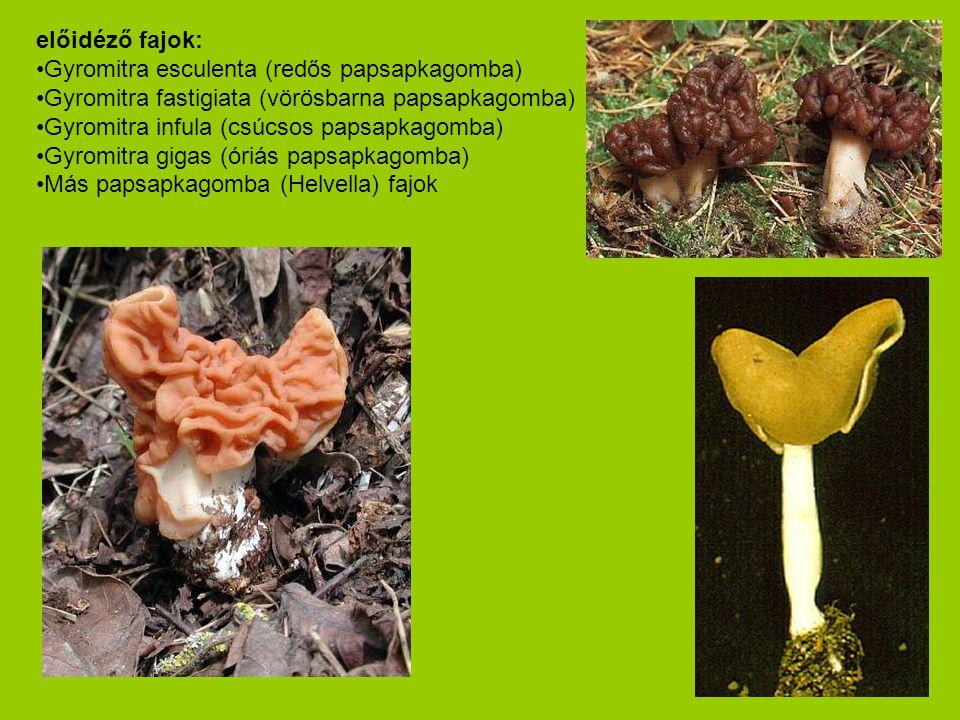 előidéző fajok: •Gyromitra esculenta (redős papsapkagomba) •Gyromitra fastigiata (vörösbarna papsapkagomba) •Gyromitra infula (csúcsos papsapkagomba)