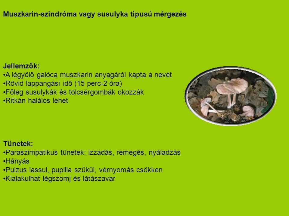 Muszkarin-szindróma vagy susulyka típusú mérgezés Jellemzők: •A légyölő galóca muszkarin anyagáról kapta a nevét •Rövid lappangási idő (15 perc-2 óra)