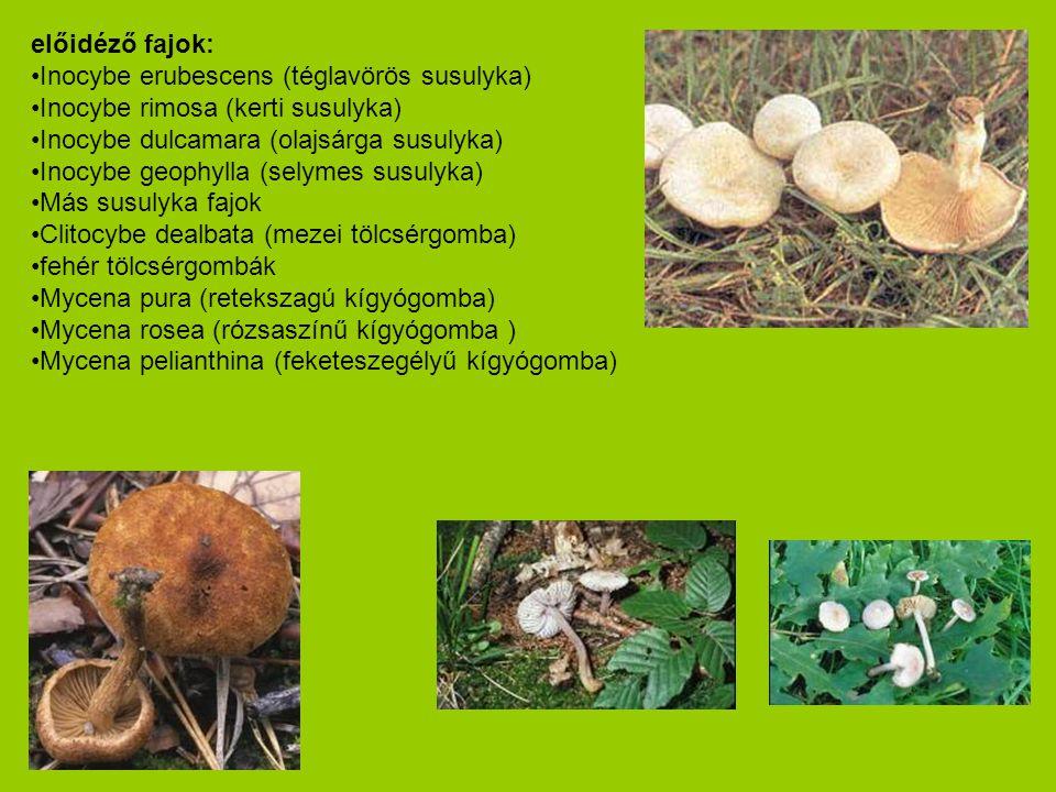előidéző fajok: •Inocybe erubescens (téglavörös susulyka) •Inocybe rimosa (kerti susulyka) •Inocybe dulcamara (olajsárga susulyka) •Inocybe geophylla