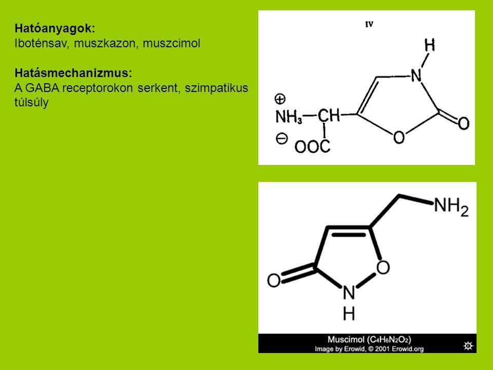 Hatóanyagok: Iboténsav, muszkazon, muszcimol Hatásmechanizmus: A GABA receptorokon serkent, szimpatikus túlsúly