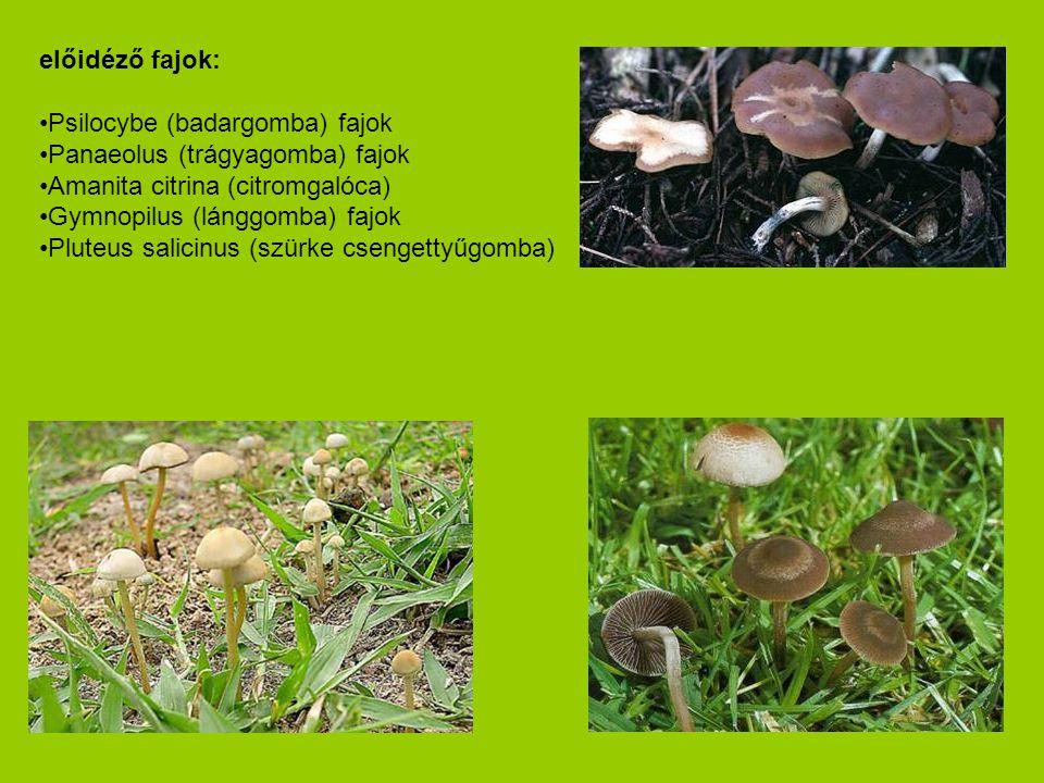 előidéző fajok: •Psilocybe (badargomba) fajok •Panaeolus (trágyagomba) fajok •Amanita citrina (citromgalóca) •Gymnopilus (lánggomba) fajok •Pluteus sa