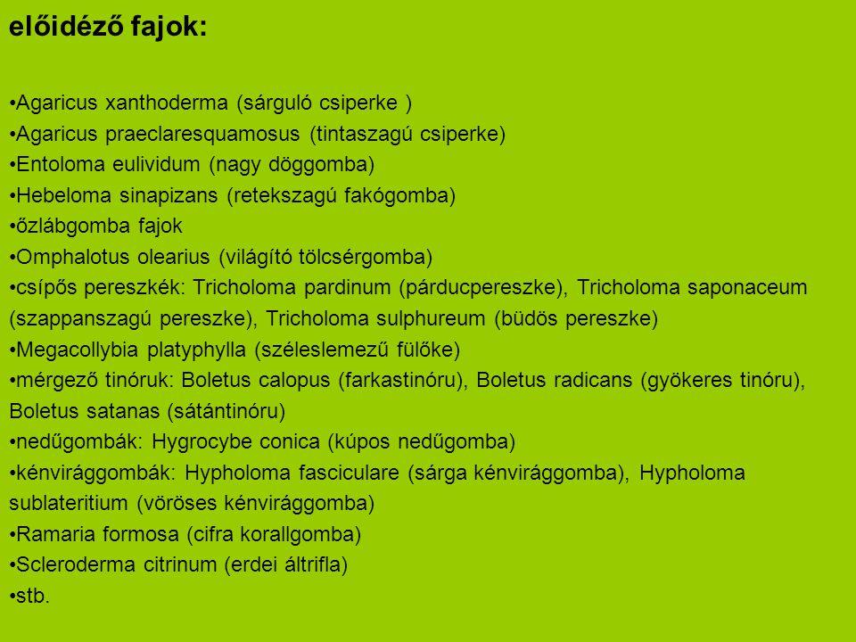 előidéző fajok: •Agaricus xanthoderma (sárguló csiperke ) •Agaricus praeclaresquamosus (tintaszagú csiperke) •Entoloma eulividum (nagy döggomba) •Hebe