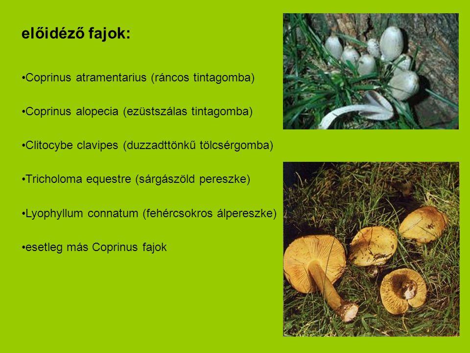előidéző fajok: •Coprinus atramentarius (ráncos tintagomba) •Coprinus alopecia (ezüstszálas tintagomba) •Clitocybe clavipes (duzzadttönkű tölcsérgomba