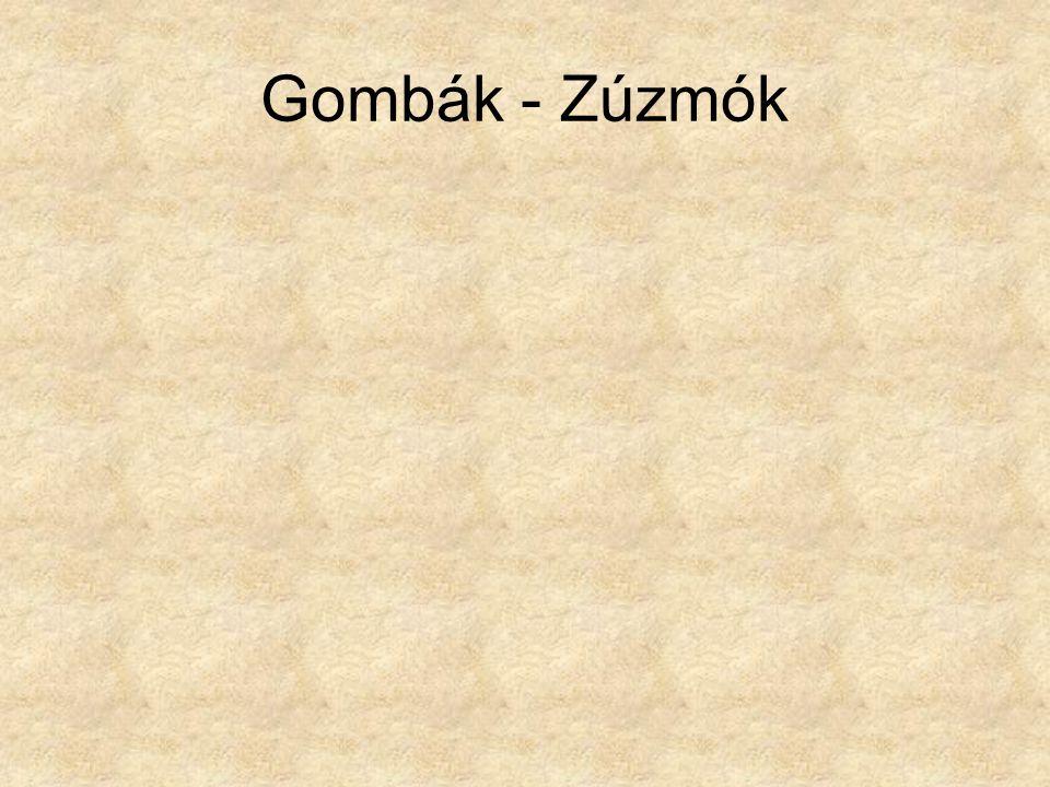 Gombák - Zúzmók