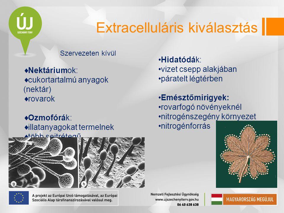 Extracelluláris kiválasztás Szervezeten kívül  Nektáriumok:  cukortartalmú anyagok (nektár)  rovarok  Ozmofórák:  illatanyagokat termelnek  több