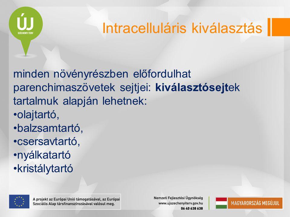 Intracelluláris kiválasztás minden növényrészben előfordulhat parenchimaszövetek sejtjei: kiválasztósejtek tartalmuk alapján lehetnek: •olajtartó, •ba