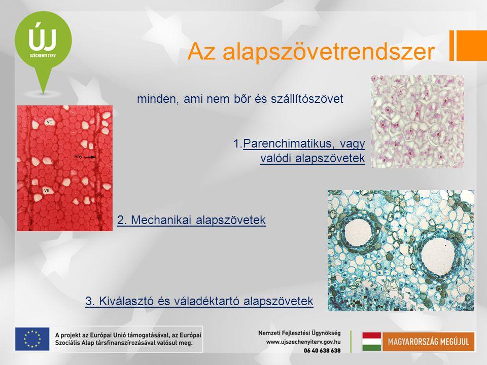 Az alapszövetrendszer minden, ami nem bőr és szállítószövet 2. Mechanikai alapszövetek 3. Kiválasztó és váladéktartó alapszövetek 1.Parenchimatikus, v