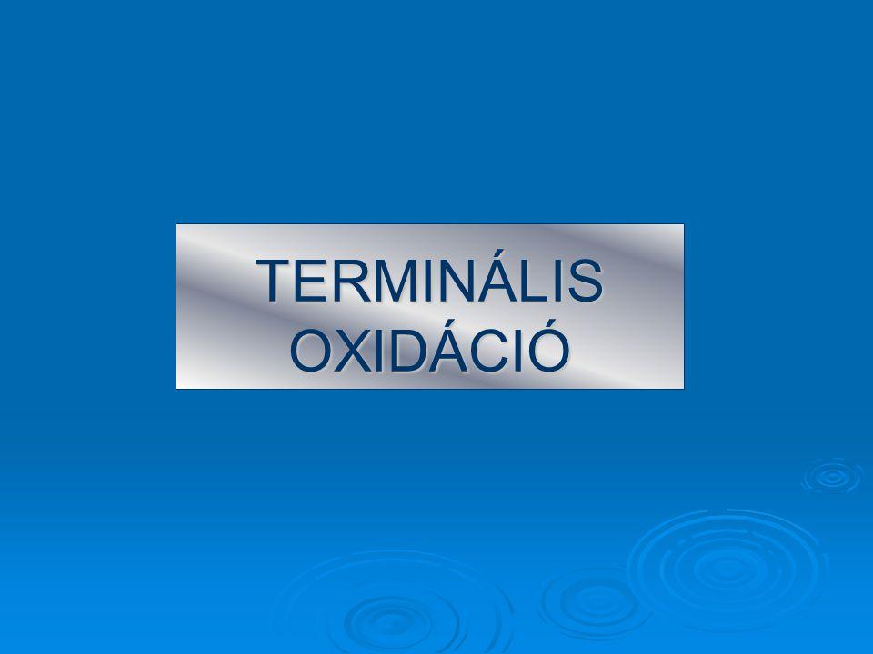 TERMINÁLIS OXIDÁCIÓ
