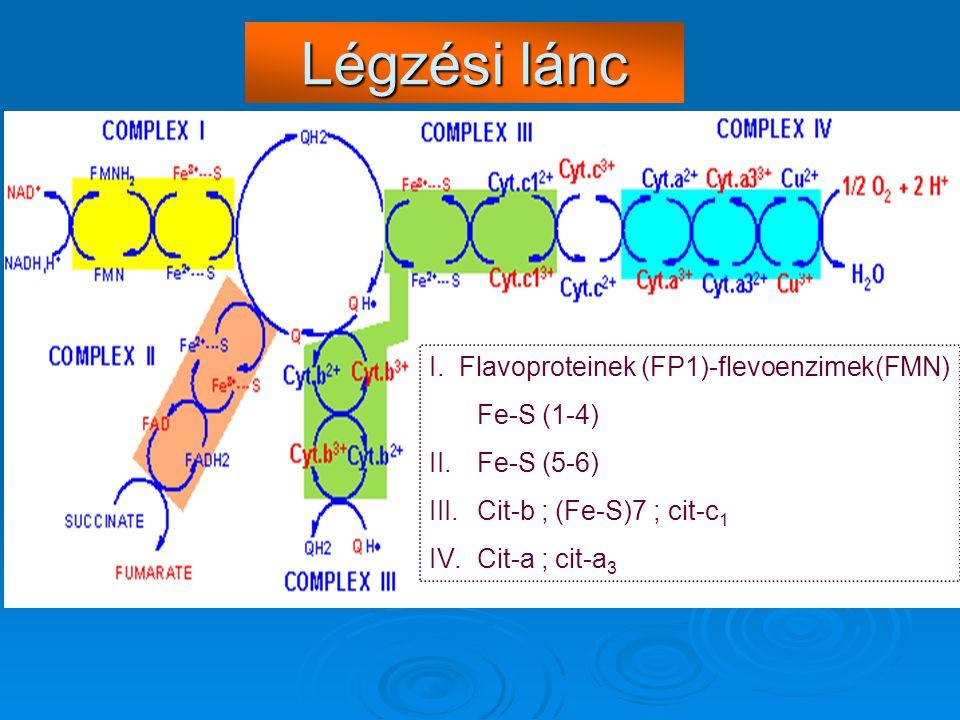 Légzési lánc I. Flavoproteinek (FP1)-flevoenzimek(FMN) Fe-S (1-4) II.Fe-S (5-6) III.Cit-b ; (Fe-S)7 ; cit-c 1 IV.Cit-a ; cit-a 3