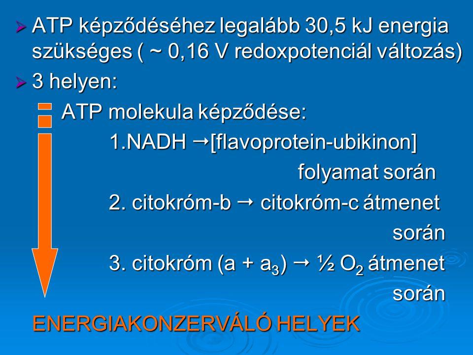  ATP képződéséhez legalább 30,5 kJ energia szükséges ( ~ 0,16 V redoxpotenciál változás)  3 helyen: ATP molekula képződése: 1.NADH  [flavoprotein-ubikinon] folyamat során 2.