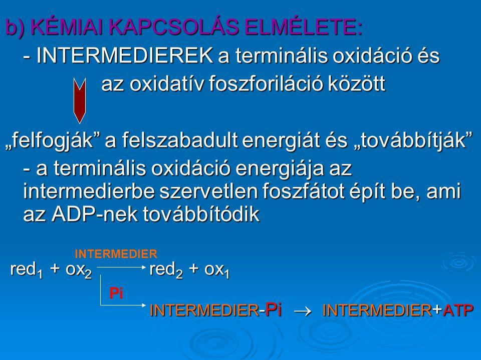 """b) KÉMIAI KAPCSOLÁS ELMÉLETE: - INTERMEDIEREK a terminális oxidáció és az oxidatív foszforiláció között """"felfogják a felszabadult energiát és """"továbbítják - a terminális oxidáció energiája az intermedierbe szervetlen foszfátot épít be, ami az ADP-nek továbbítódik red 1 + ox 2 red 2 + ox 1 red 1 + ox 2 red 2 + ox 1 INTERMEDIER -Pi  INTERMEDIER + ATP INTERMEDIER Pi"""