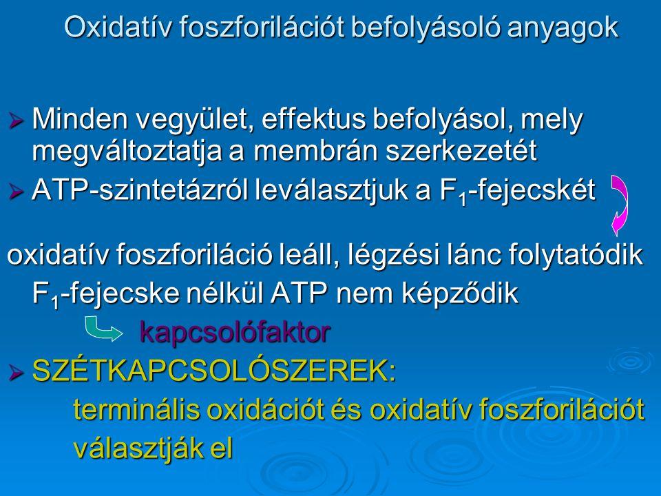 Oxidatív foszforilációt befolyásoló anyagok  Minden vegyület, effektus befolyásol, mely megváltoztatja a membrán szerkezetét  ATP-szintetázról leválasztjuk a F 1 -fejecskét oxidatív foszforiláció leáll, légzési lánc folytatódik F 1 -fejecske nélkül ATP nem képződik kapcsolófaktor  SZÉTKAPCSOLÓSZEREK: terminális oxidációt és oxidatív foszforilációt választják el