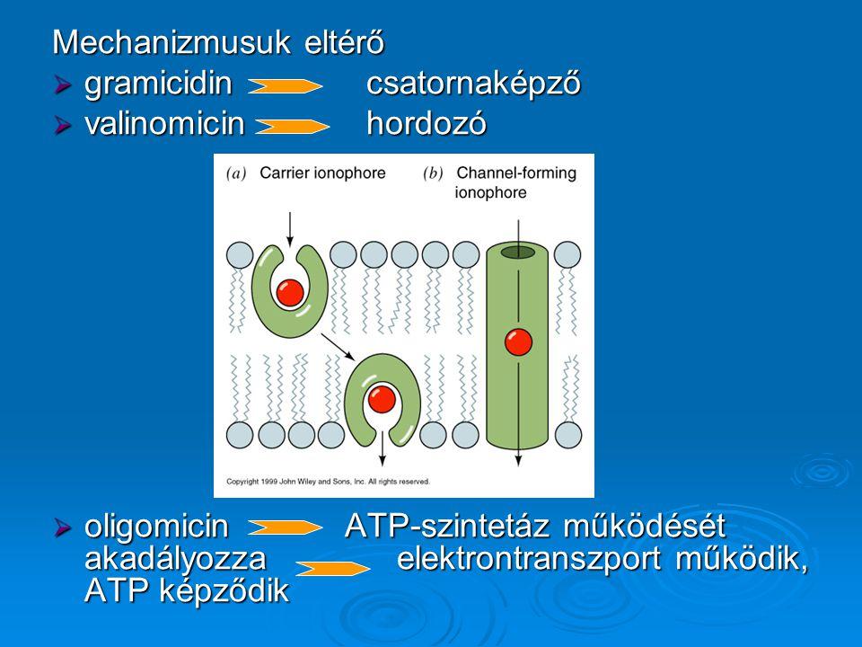 Mechanizmusuk eltérő  gramicidin csatornaképző  valinomicin hordozó  oligomicin ATP-szintetáz működését akadályozzaelektrontranszport működik, ATP képződik