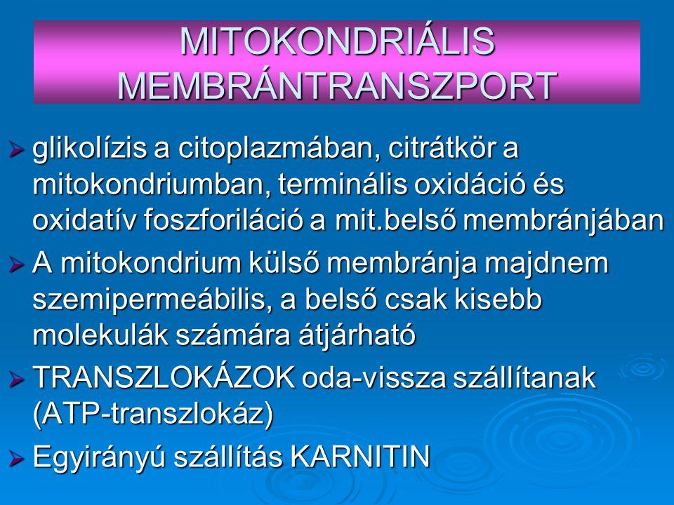 MITOKONDRIÁLIS MEMBRÁNTRANSZPORT  glikolízis a citoplazmában, citrátkör a mitokondriumban, terminális oxidáció és oxidatív foszforiláció a mit.belső membránjában  A mitokondrium külső membránja majdnem szemipermeábilis, a belső csak kisebb molekulák számára átjárható  TRANSZLOKÁZOK oda-vissza szállítanak (ATP-transzlokáz)  Egyirányú szállítás KARNITIN