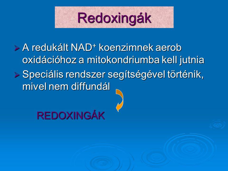 Redoxingák  A redukált NAD + koenzimnek aerob oxidációhoz a mitokondriumba kell jutnia  Speciális rendszer segítségével történik, mivel nem diffundá