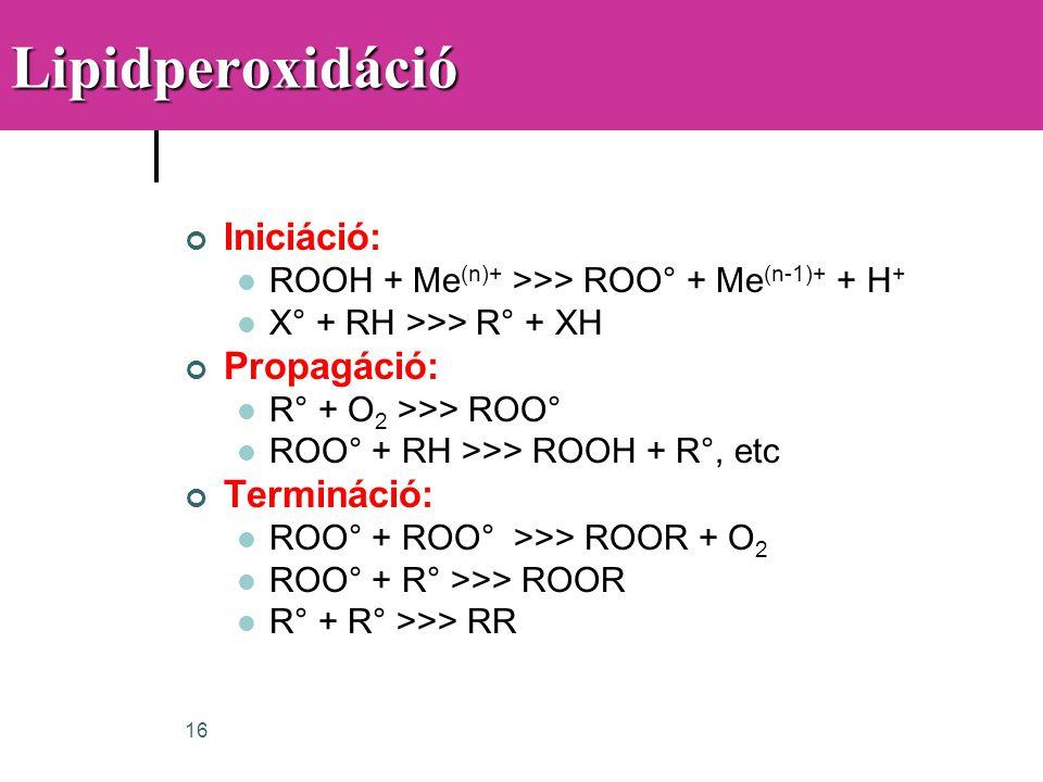 16Lipidperoxidáció Iniciáció:  ROOH + Me (n)+ >>> ROO° + Me (n-1)+ + H +  X° + RH >>> R° + XH Propagáció:  R° + O 2 >>> ROO°  ROO° + RH >>> ROOH +