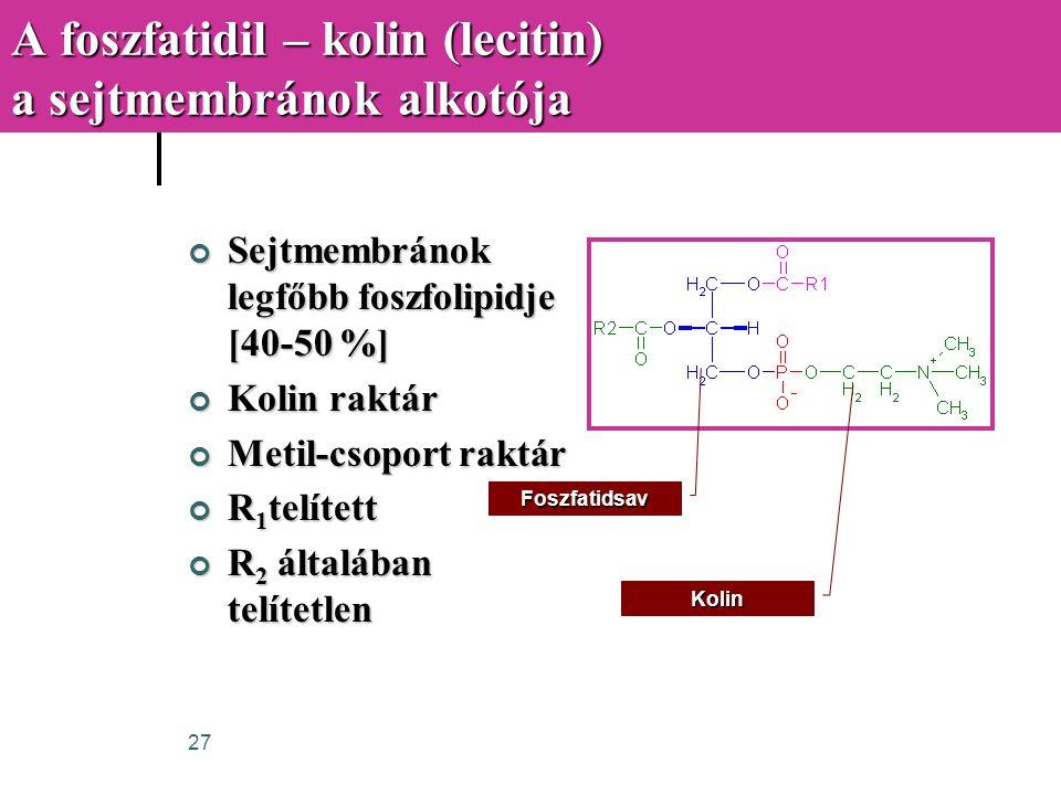 27 A foszfatidil – kolin (lecitin) a sejtmembránok alkotója Sejtmembránok legfőbb foszfolipidje [40-50 %] Kolin raktár Metil-csoport raktár R 1 telíte