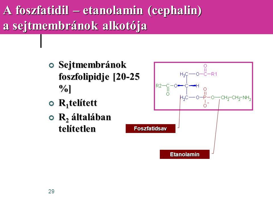29 A foszfatidil – etanolamin (cephalin) a sejtmembránok alkotója Sejtmembránok foszfolipidje [20-25 %] R 1 telített R 2 általában telítetlen Foszfati