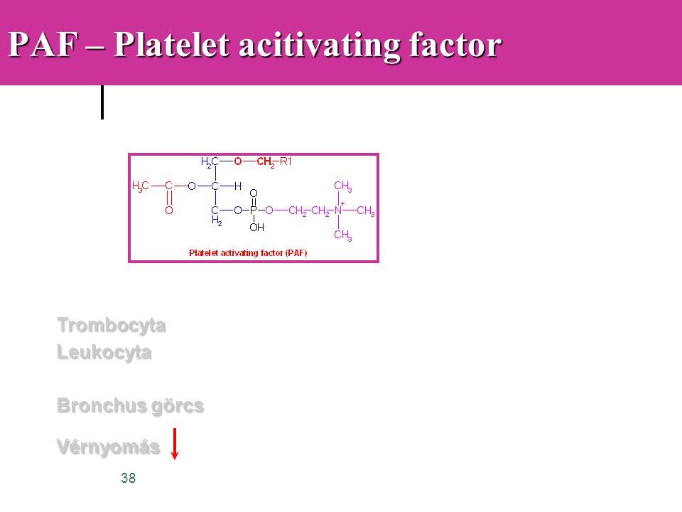 38 PAF – Platelet acitivating factor TrombocytaLeukocyta Bronchus görcs Vérnyomás