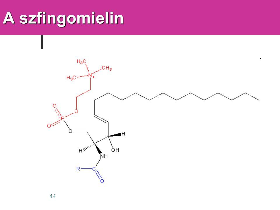 44 A szfingomielin