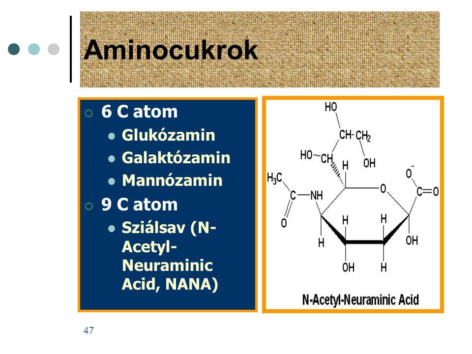 47 Aminocukrok 6 C atom  Glukózamin  Galaktózamin  Mannózamin 9 C atom  Sziálsav (N- Acetyl- Neuraminic Acid, NANA)