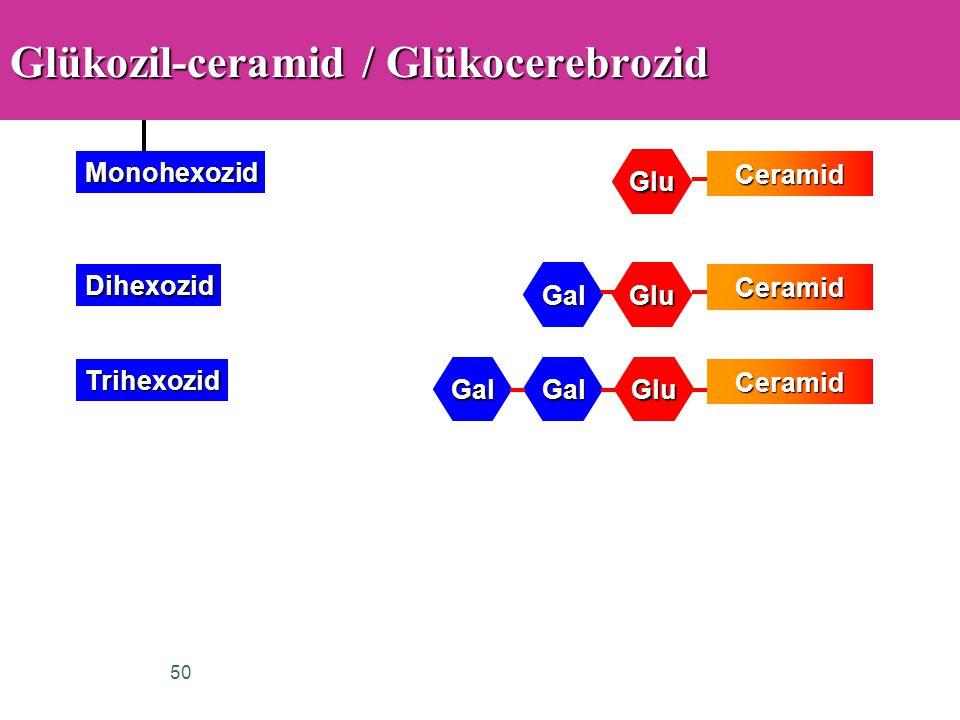 50 Glükozil-ceramid / Glükocerebrozid Ceramid Glu Monohexozid Ceramid GluGal DihexozidCeramid GluGalGal Trihexozid