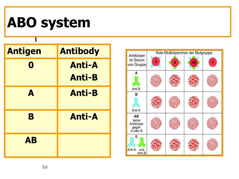 54 ABO system AntigenAntibody 0Anti-A Anti-B A BAnti-A AB