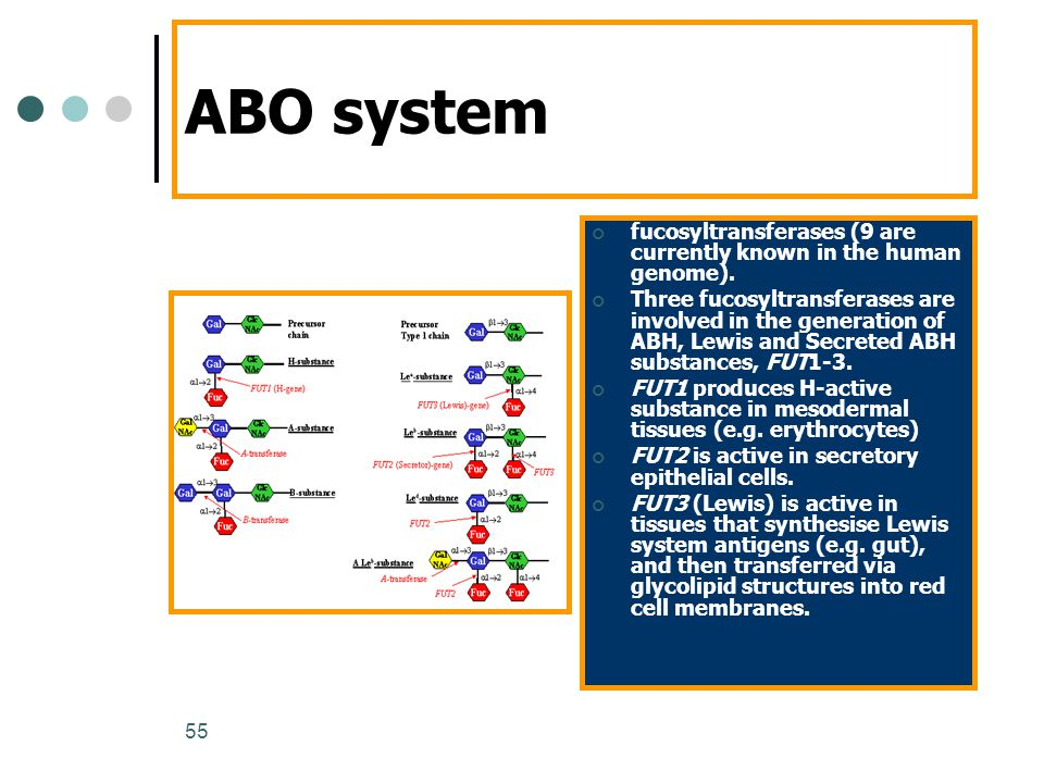 55 ABO system fucosyltransferases (9 are currently known in the human genome). Three fucosyltransferases are involved in the generation of ABH, Lewis