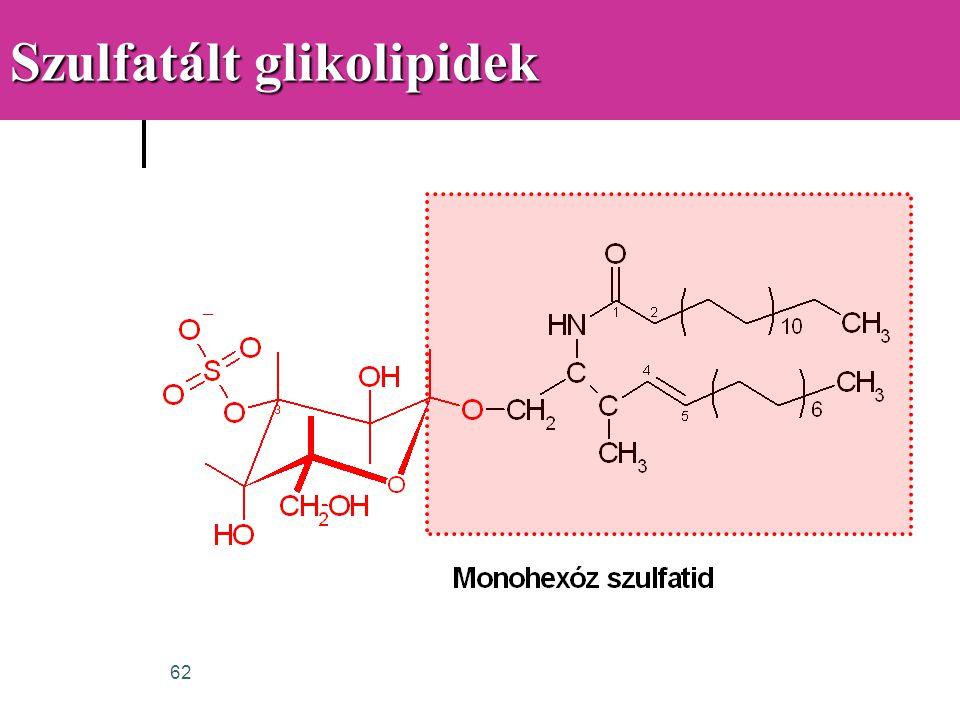 62 Szulfatált glikolipidek
