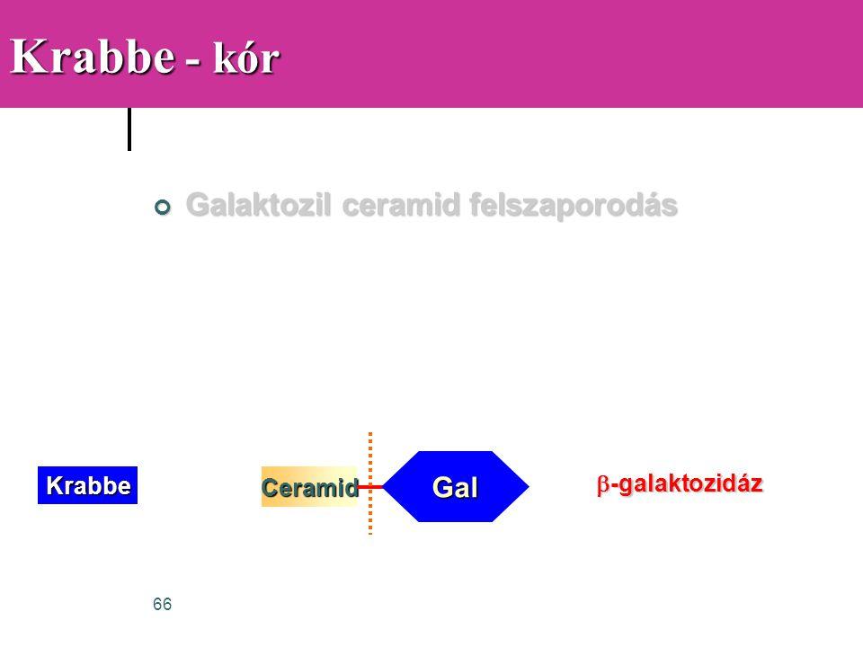 66 Krabbe - kór Galaktozil ceramid felszaporodás Ceramid Gal Krabbe  -galaktozidáz